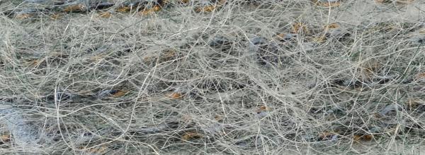 Ribes Tweed - 77322